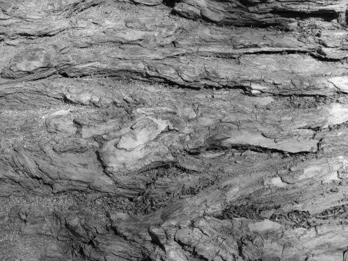 Tree Bark Texture 18