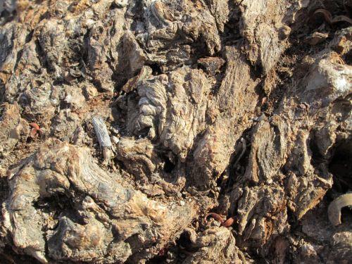 Tree Bark Texture 20