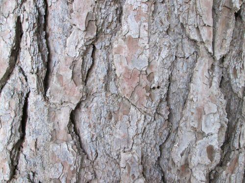 Tree Bark Texture 24