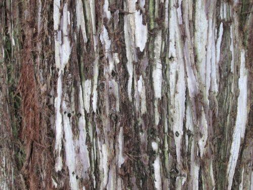 Tree Bark Texture 26