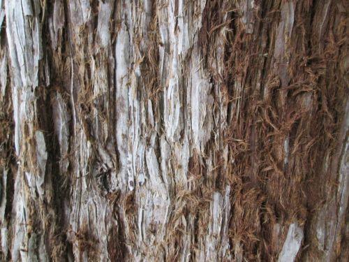 Tree Bark Texture 28