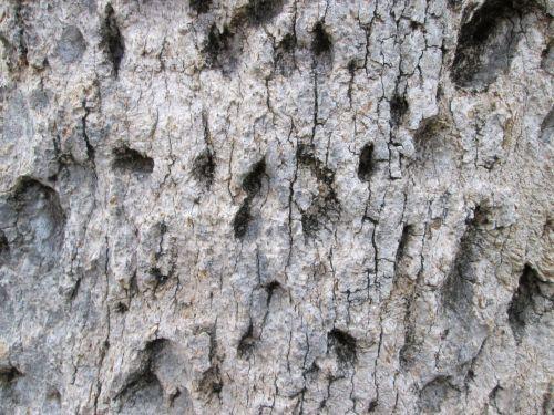 Tree Bark Texture 35