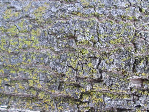 Tree Bark Texture 37
