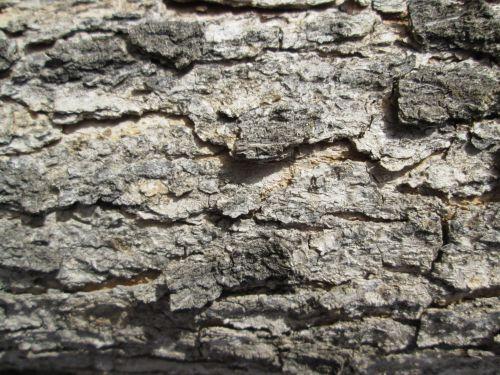 Tree Bark Texture 38