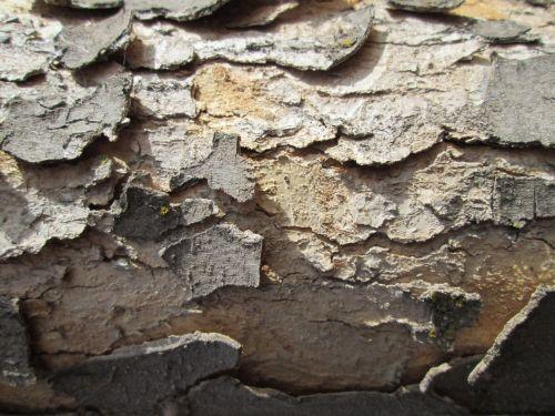 Tree Bark Texture 39
