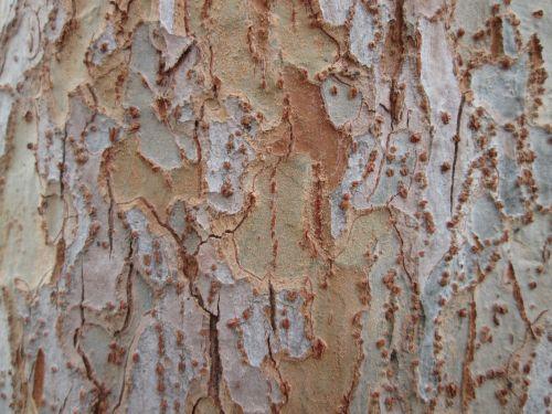 Tree Bark Texture 6