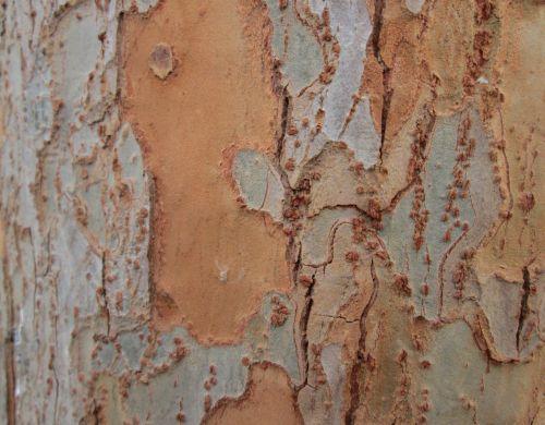 Tree Bark Texture 7