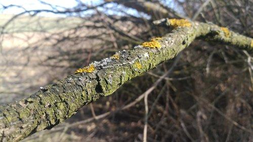 tree branch  moss  nature