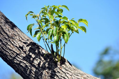 Tree Branch Sprouts