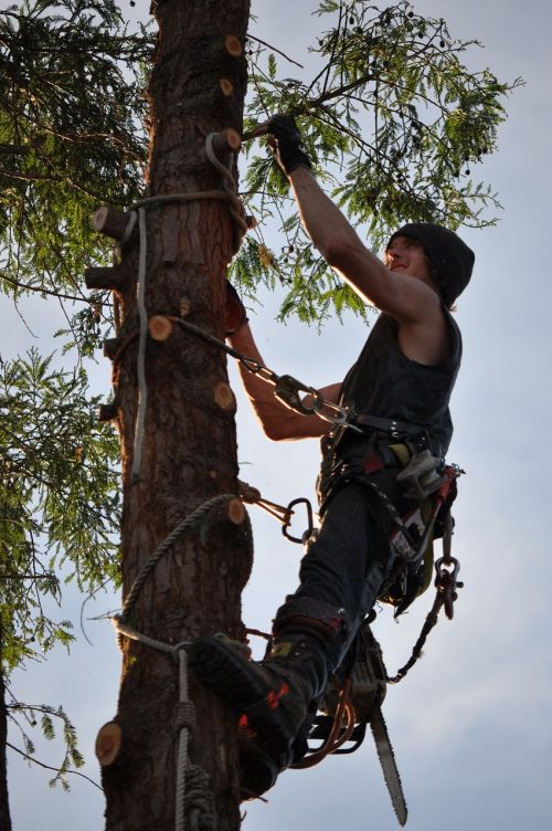 tree climber chainsaw man
