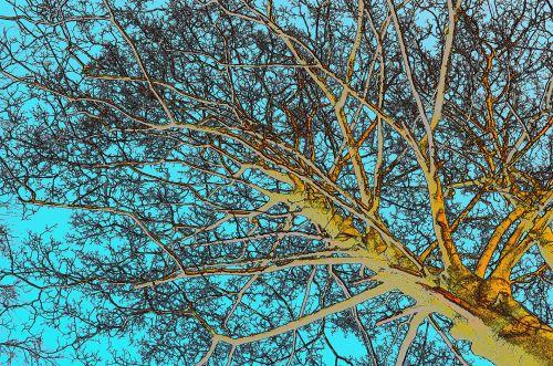 Tree - Color Sketch