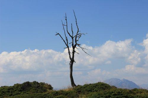 tree corpse tree skeleton threaded