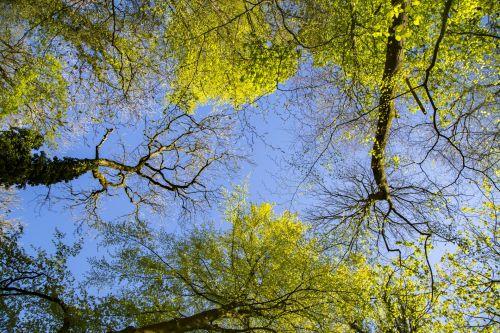 Tree Crowns On Deep Blue Sky