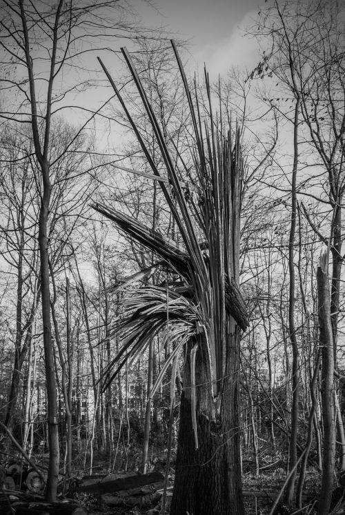 tree damage tree forward