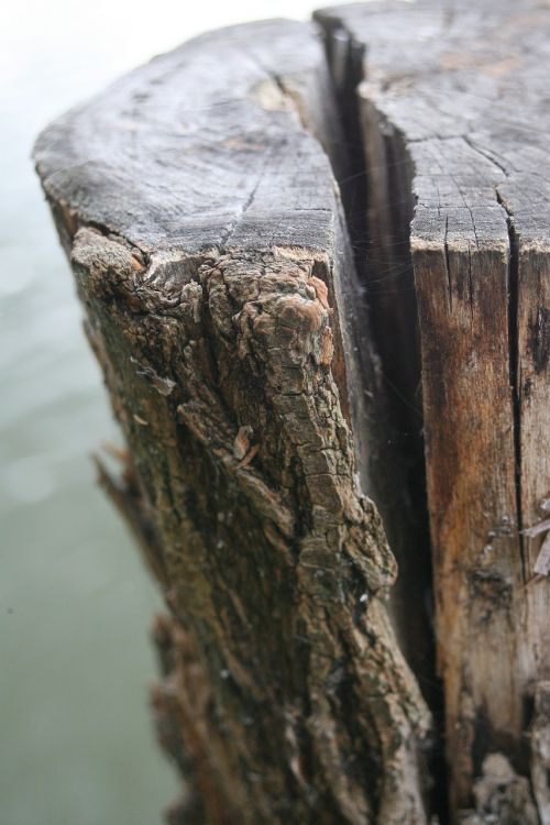 tree dry crack dry wood