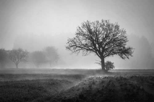 medis, rytas, migla, miglotas, rūkas, rūkas, šviesa, juoda, balta, vienspalvis, vienas, vienišas, vienas, vienas, žiema, gamta, plikas, Laisvas, viešasis & nbsp, domenas, medis anksti ryte rūkas