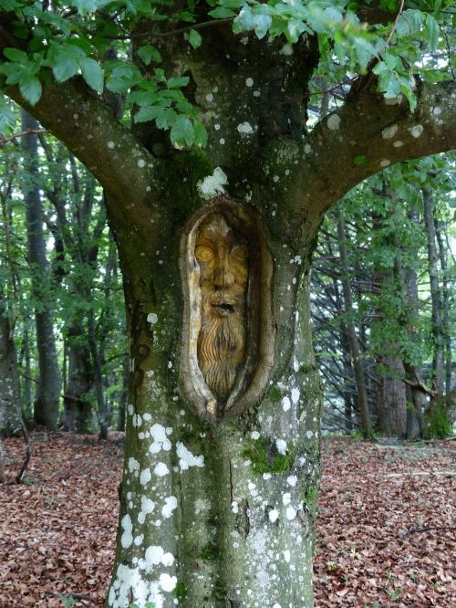 tree face forest spirit carving