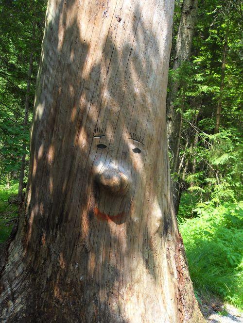 tree face log forest spirit