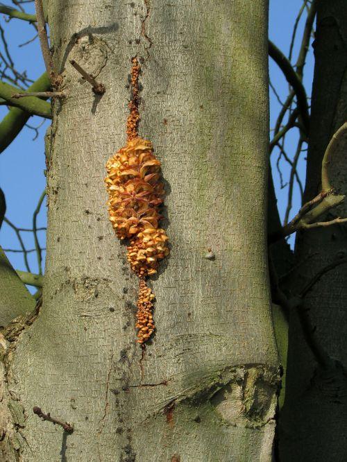 tree fungi autumn mushroom