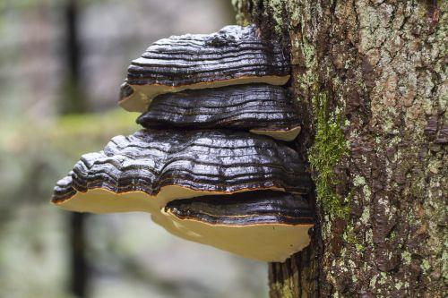 tree fungi mushroom moss
