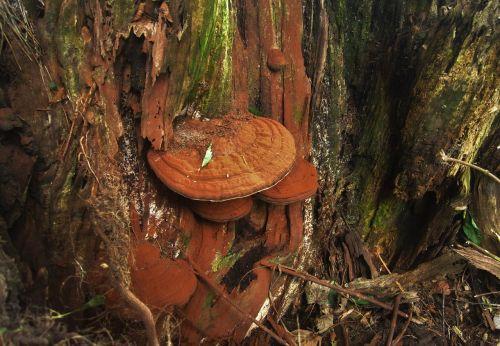 tree fungus autumn autumn time