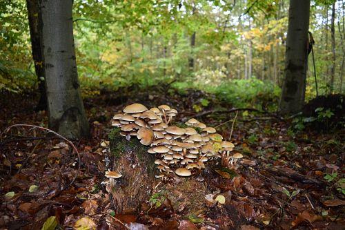tree fungus autumn tribe