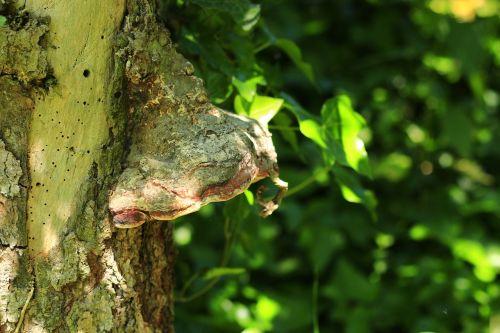 medžio grybas,žurnalas,saulės šviesa,gamta,grybai,miškas,medis,žalias,nuotaika,idilija,senas medis,žalias medis