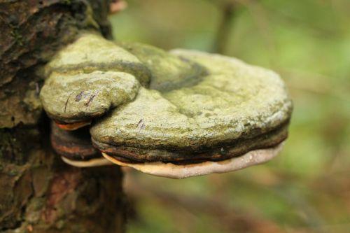 tree fungus mushroom forest