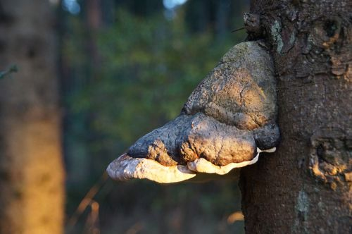 tree fungus forest mushroom