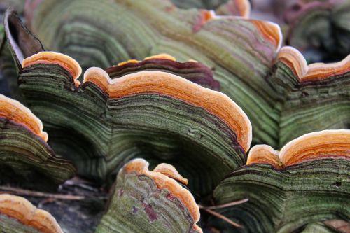 tree fungus mushroom baumschwamm