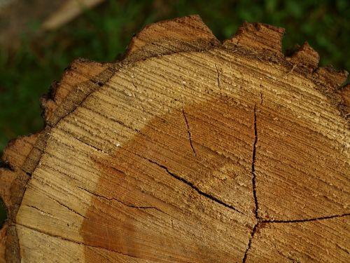 tree grates tree stumps tree bark