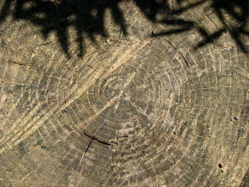 tree grates annual rings tree stump