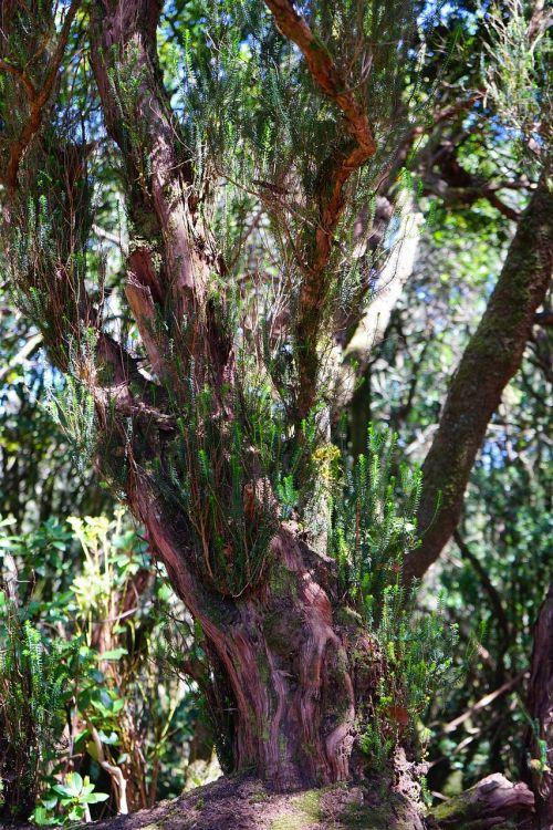tree heath tree forest