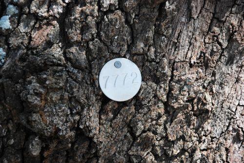 tree identification tags identification tags tree tags