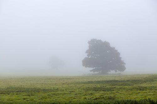 rūkas, rūkas, kraštovaizdis, gamta, sezonai, ruduo, medis, medžiai, siluetas, medis rūkas