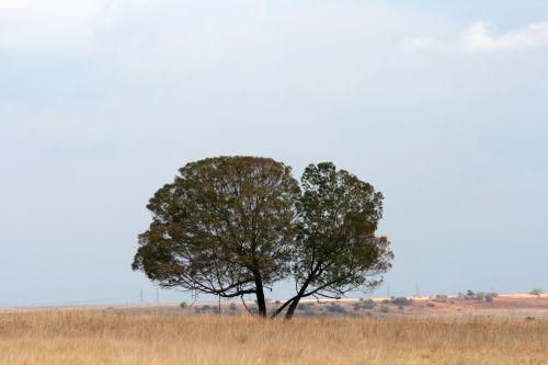 Tree In The Veld