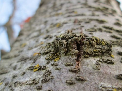 Tree Knot Macro 10