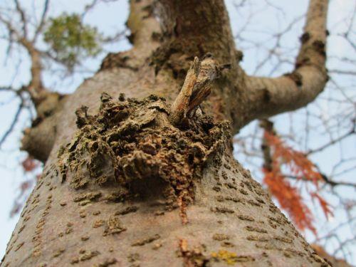 Tree Knot Macro 11