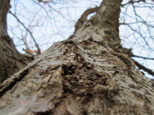 makro, mediena, medis, augalas, augmenija, mazgas, augimas, medžio mazgo makro 6