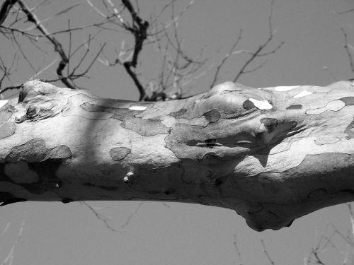 medis, galūnė, filialas, tekstūra, gyvūnas, oda, Snakeskin, medžio galūnė