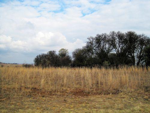 Tree Line And Veld