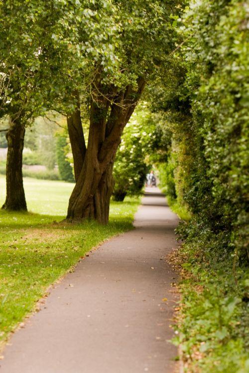 medis, medžiai, gražus, gamta, parkas, kelias, kelias, pėsčiųjų takas, alėja, žalias, nuotrauka, vaizdas, medžio linijos kelias