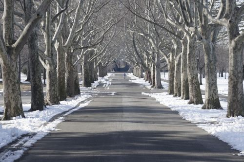 tree lined flushing meadow park snow