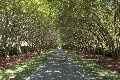 tree lined sidewalk canopy