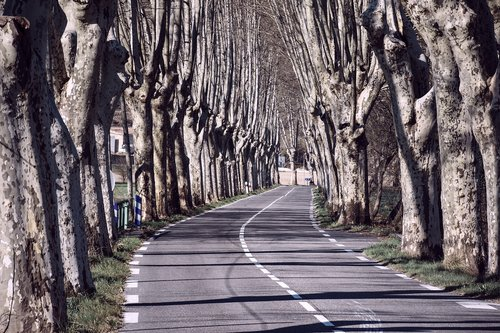 tree lined  trees  roadway