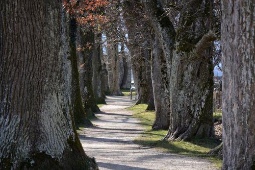 tree lined avenue avenue trees