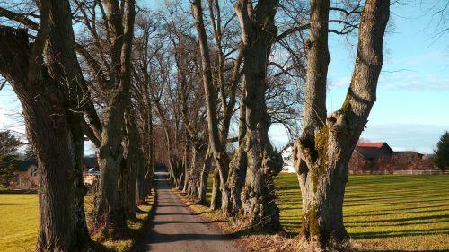 medžio pamušalas,marktoberdorf,medžiai
