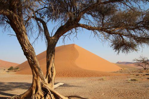 tree namibia desert africa