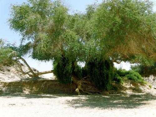 Tree Near Dry River Bed