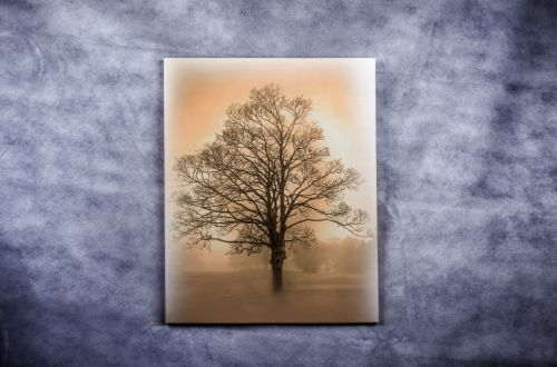 Tree On The Canvas